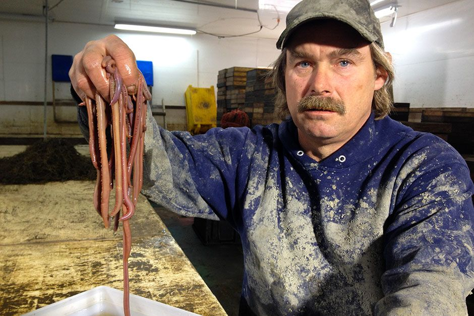 Maine, USA: Jim sorts worms. This image is from Filthy Riches. [Photo of the day - August 2014]