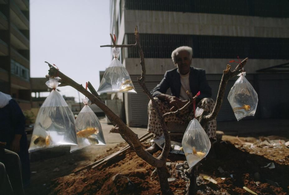 A man sells goldfish in bags tied to a tree branch in the Shatila Palestinian Camp of Beirut. [  -  2011]