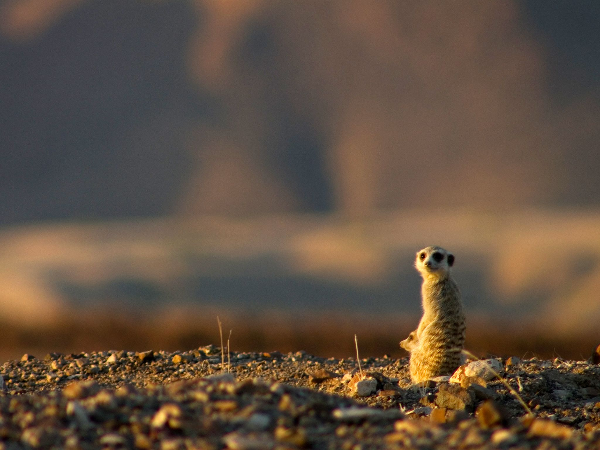"Meerkat na grebenu. Ovo je prizor iz emisije ""Divlja Namibija"". [Photo of the day - rujan 2014]"