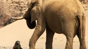 Elephant standing with baboon sitting... [Photo of the day - 30 SEPTEMBER 2014]