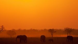 Elephant herd silhouette in sunset (l... [Photo of the day - 29 OUTUBRO 2014]