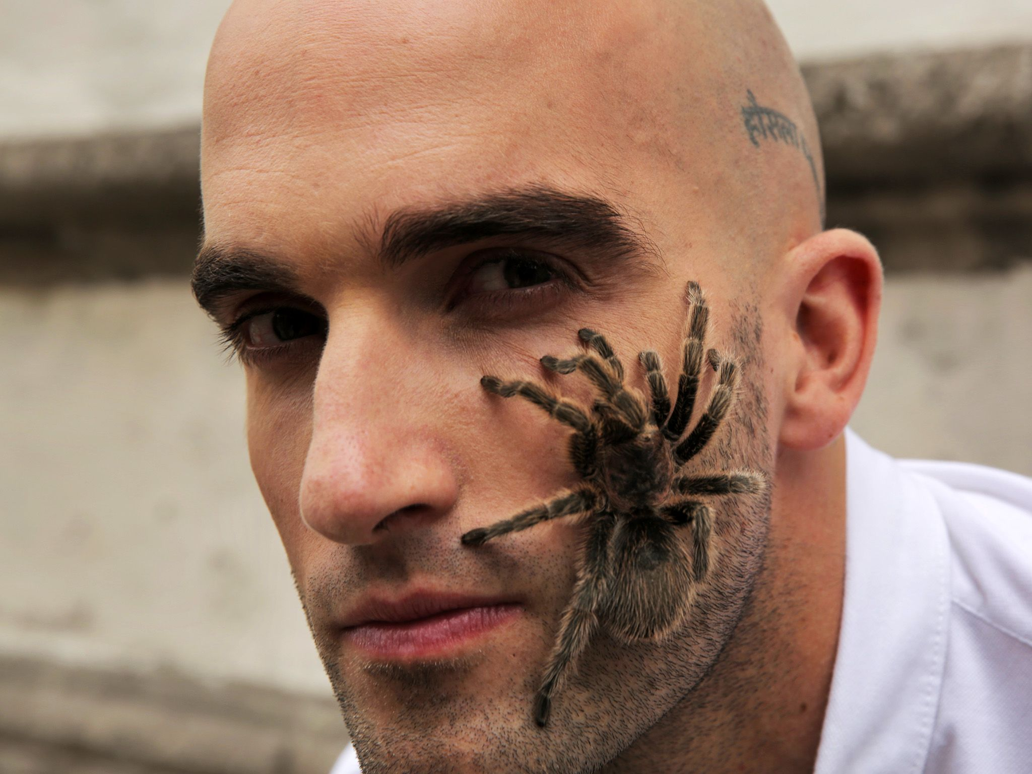 Mexico City, Mexico -  DMC with a tarantula on his left cheek.  From the 'fear box' trick where D... [Photo of the day - Novembro 2014]