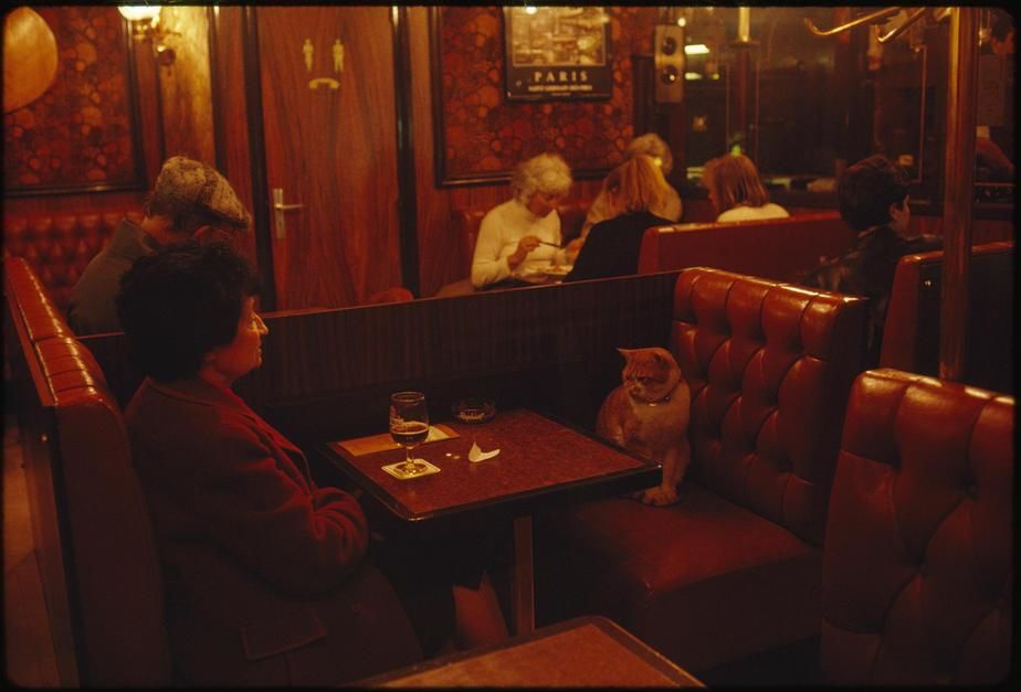 "A regular at Le Louis IX, ""Caramel"" keeps a client company in Paris. [Photo of the day - אפריל 2011]"
