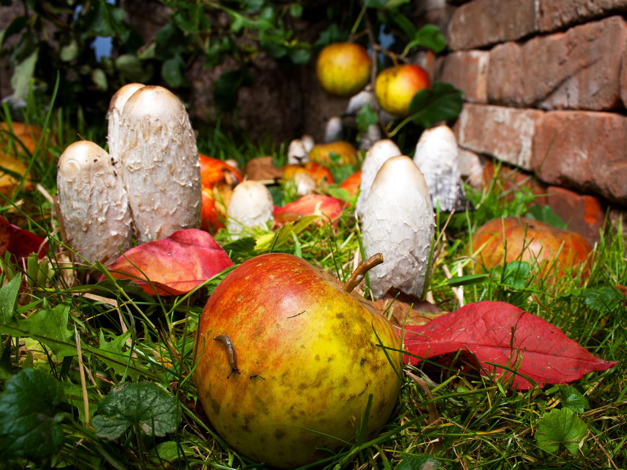 Mushrooms growing in the garden. This image is from Secret Garden. [Photo of the day - January 2015]
