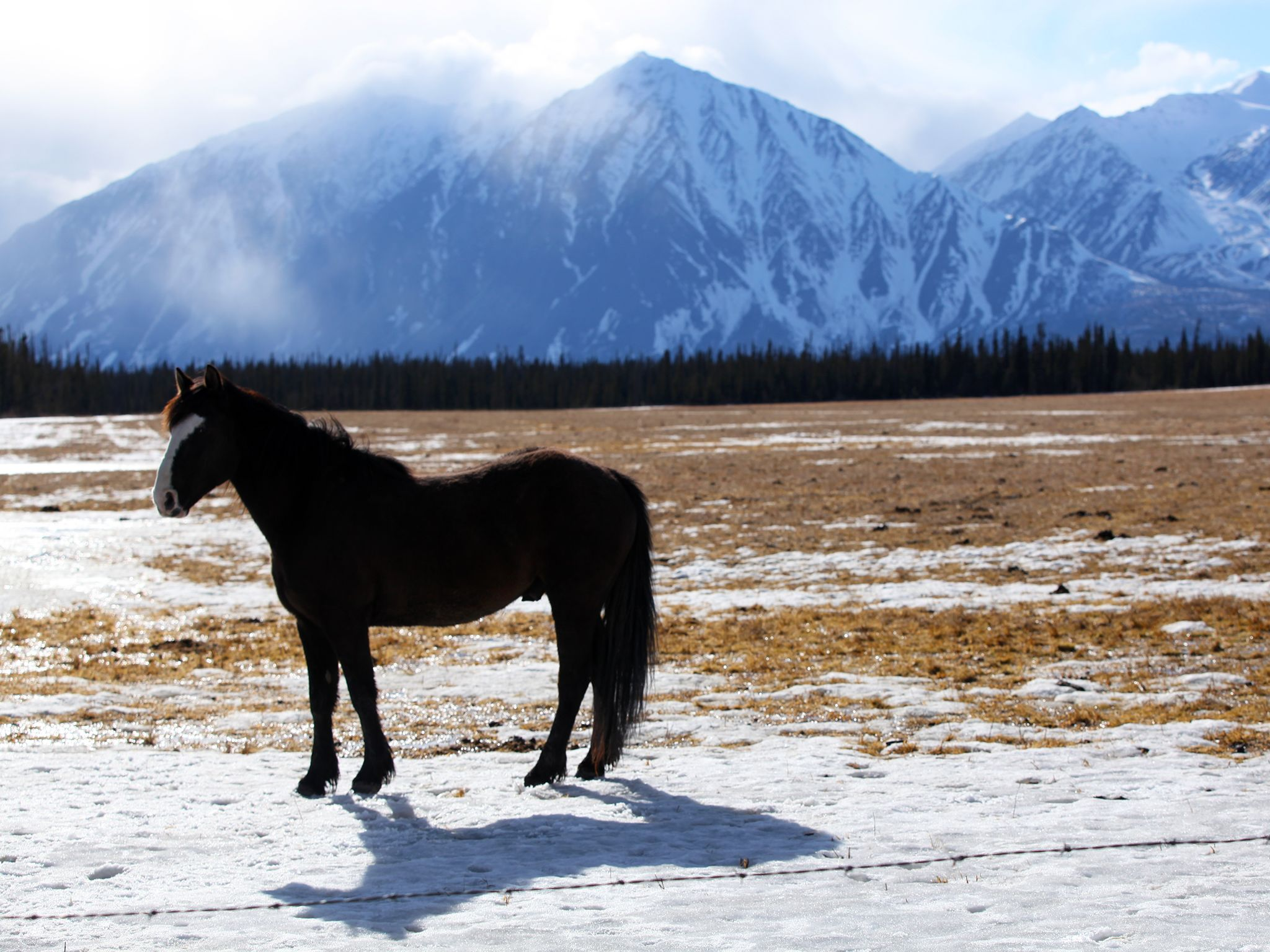 Haines Junction, YT, Canada: Horse stands in front of a mountain top view. This image is from... [Photo of the day - 一月 2015]