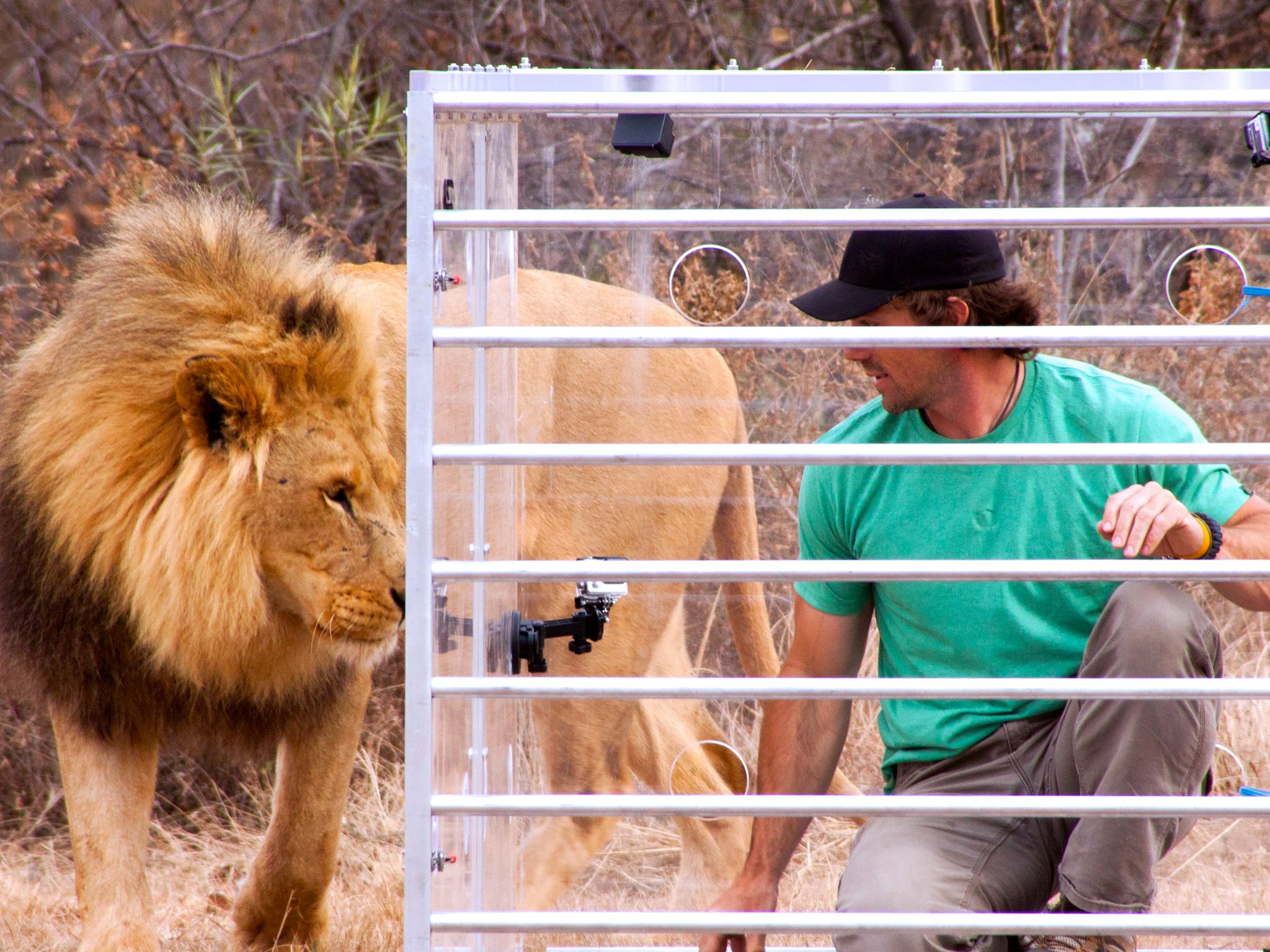 KwaZulu-Natal, South Africa - A full grown male lion gets up close and personal with host Boone... [Photo of the day - فوریه 2015]