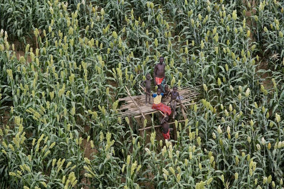 Personnes sur une plateforme dans un champ à Sorghum. [Photo of the day - avril 2011]