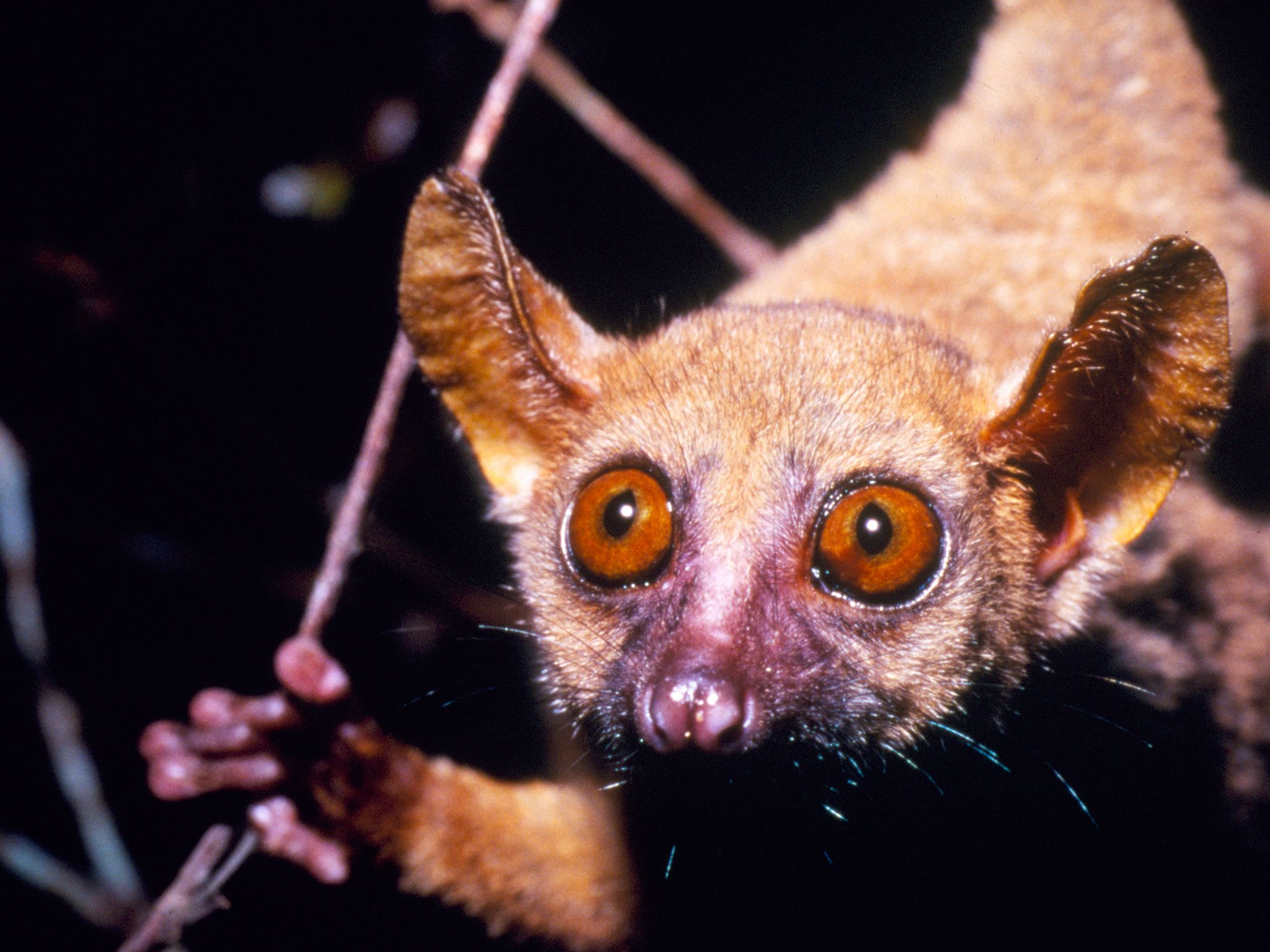 Separated from mainland Africa for more than a hundred million years, life on Madagascar has foll... [Photo of the day - april 2015]