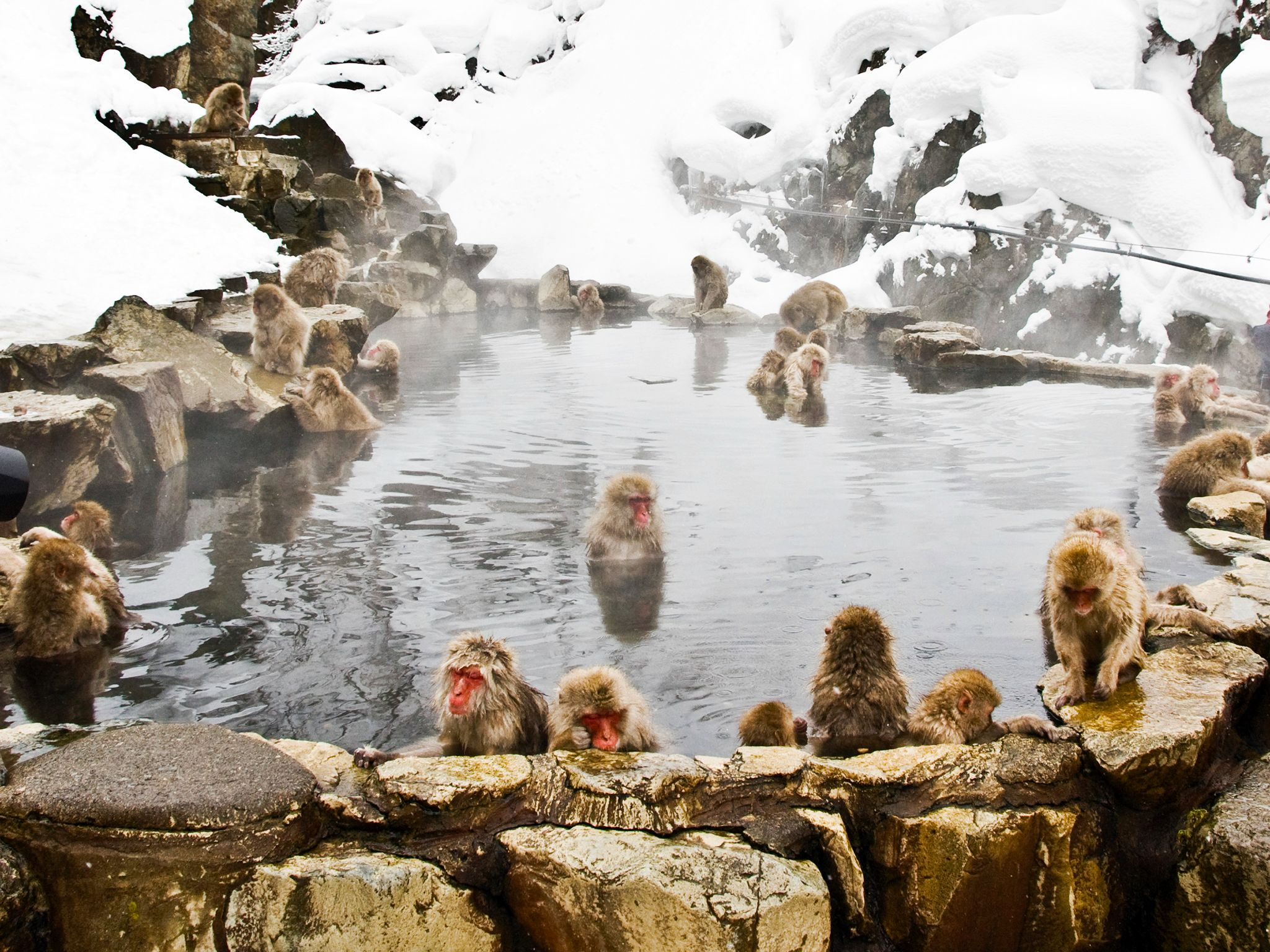 Japanese macaques have been visiting this hot pool since the 1960s. This image is from Japan's Wi... [Photo of the day - april 2015]