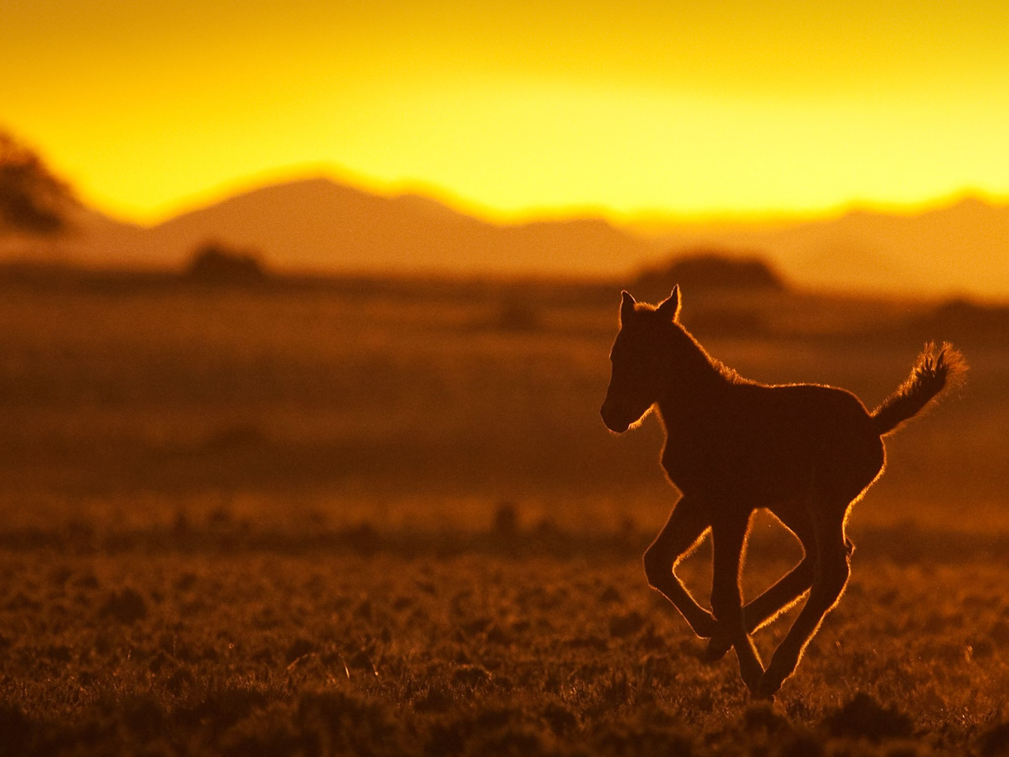 Namibia: A foal in the sunset. This image is from Africa's Wild West. [Photo of the day - April 2015]