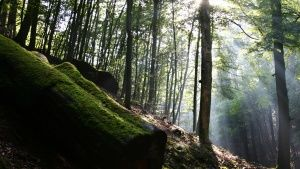 Germany: Pristine forests are first c... [Photo of the day -  6 五月 2015]