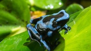 Medium shot of poison dart frog sitti... [Photo of the day - MAY 21, 2015]