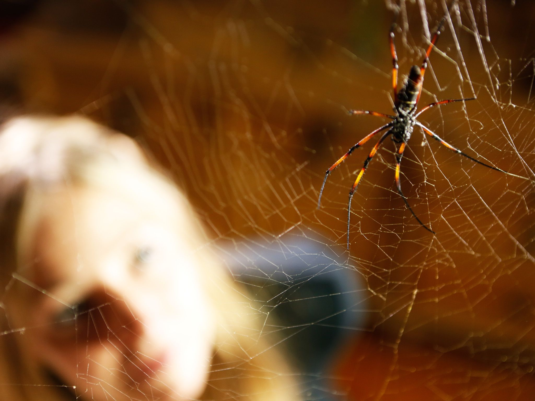 Alice Roberts looks up at the largest spider in the dining room - the golden orb weaver. This... [Photo of the day - June 2015]