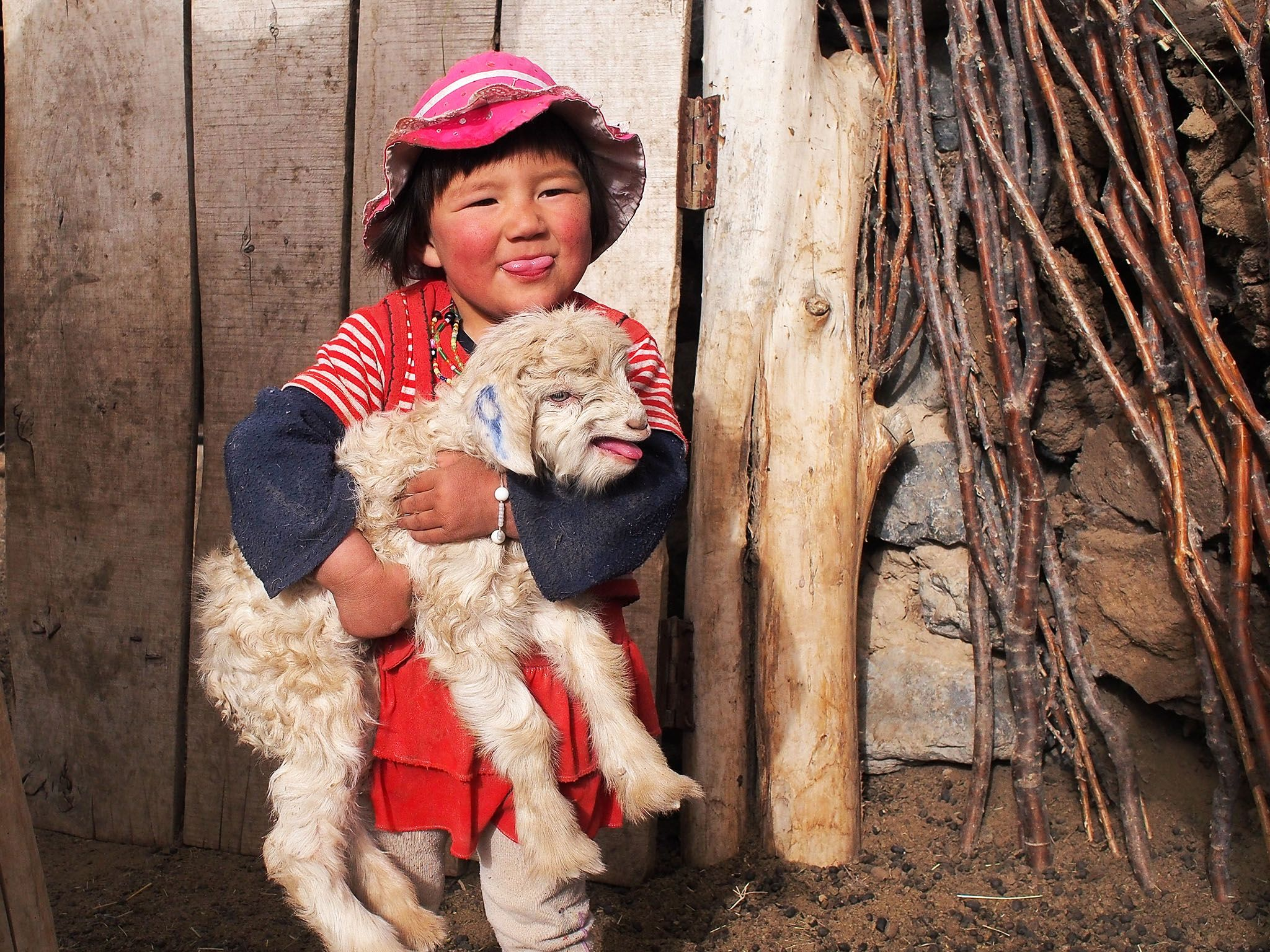 Macan's granddaughter playing with a lamb in the pen. Macan, a master falconer, teaches his son... [Photo of the day - August 2015]
