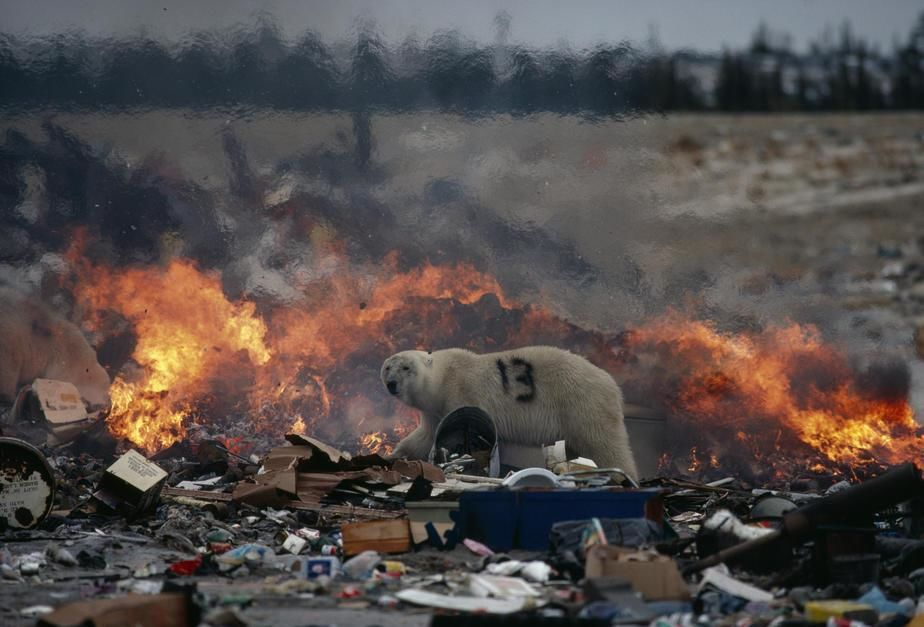 Polar Bears invade the town and scavenge its nearby dump in Churchil Manitoba. [Photo of the day - מאי 2011]