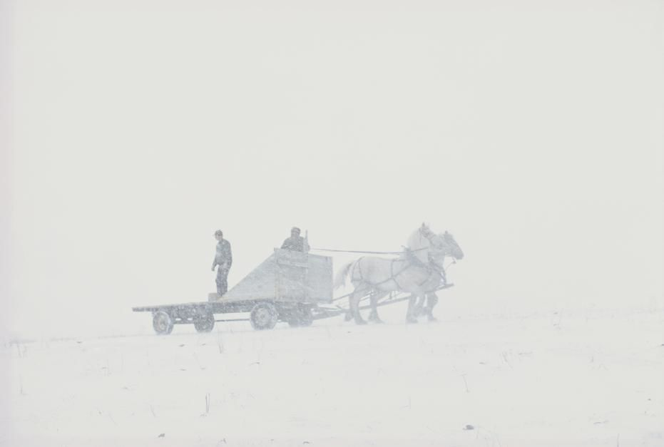 Feeding cattle in the snow on the Padlock Ranch in Montana. [Photo of the day - יוני 2011]