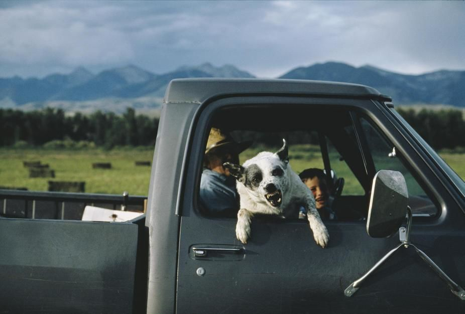 Een veehouder met zijn grommende hond in Idaho.  [Photo of the day - juni 2011]