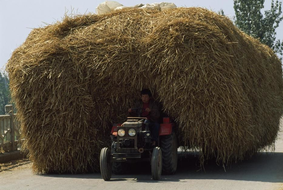 Een boer trekt een kar vol hooi in Shandong.  [Photo of the day - juni 2011]