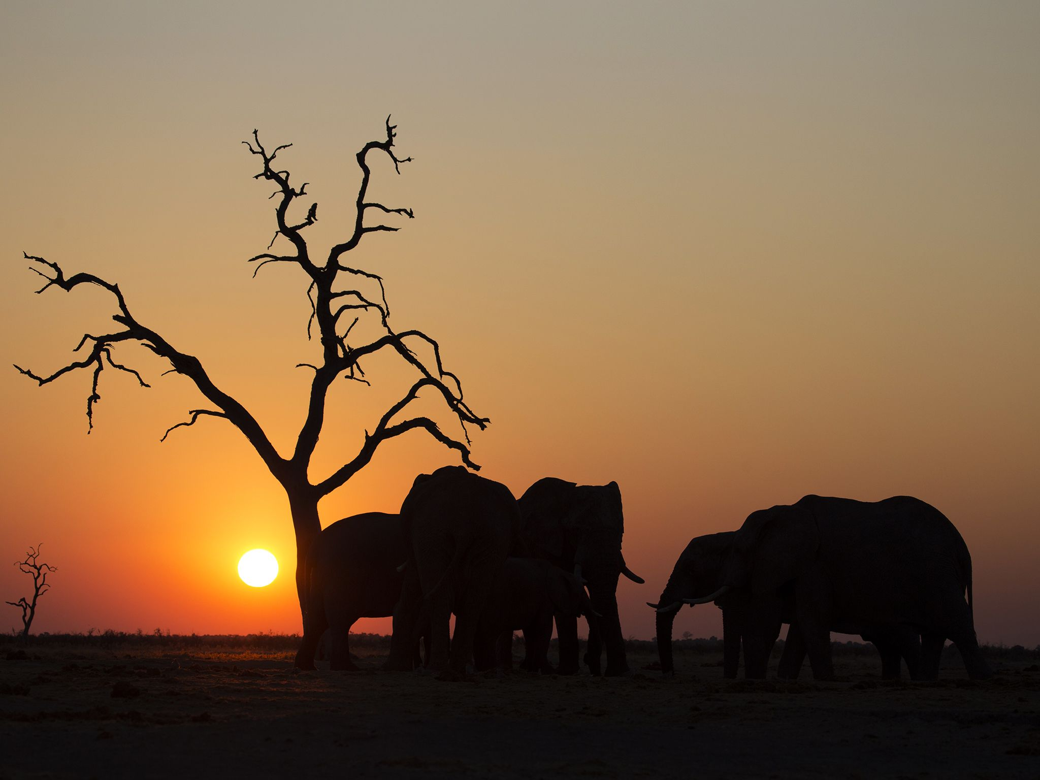 A silhouette of elephants. This image is from Savage Kingdom. [Photo of the day - نوامبر 2016]