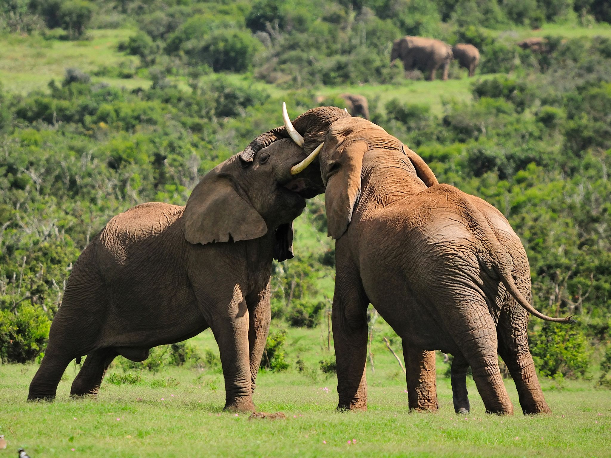 South Africa: Elephants  have one of the largest life spans of all mammals - living up to 70... [Photo of the day - دسامبر 2016]