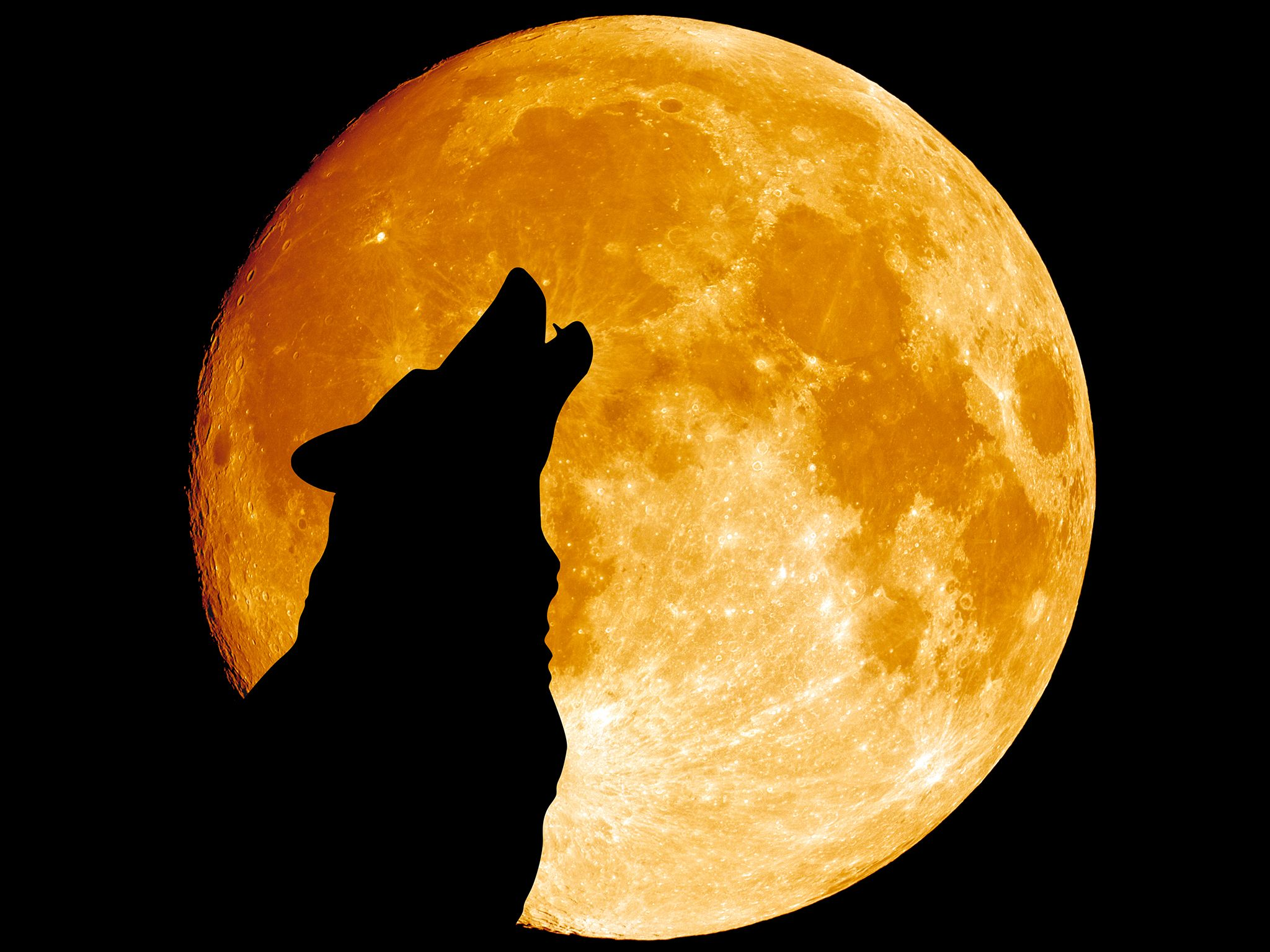 Montana:  Wolf howling at the moon in the midnight. This image is from Survive the Wild. [Photo of the day - March 2017]