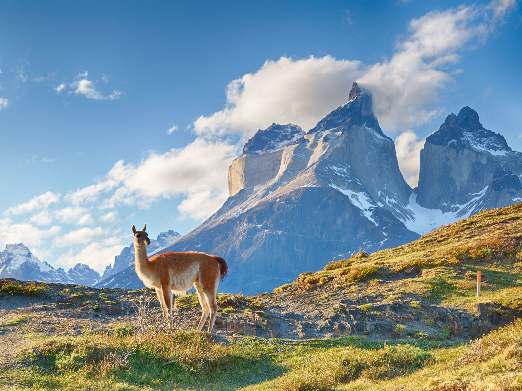 Guanaco in Chilean Patagonia. This image is from Extreme Animals. [Photo of the day - 六月 2017]