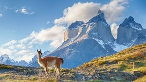 Guanaco in Chilean Patagonia. This... [תמונת היום - 23 יוני 2017]