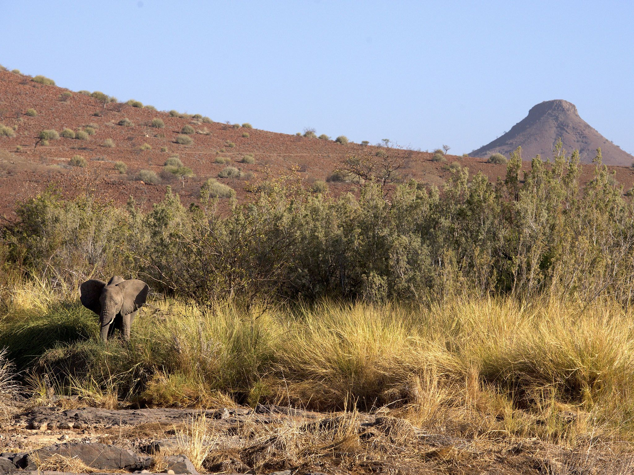 Namibia: The Kunene Desert Elephants share their habitat with farmers and their livestock –... [Photo of the day - June 2017]