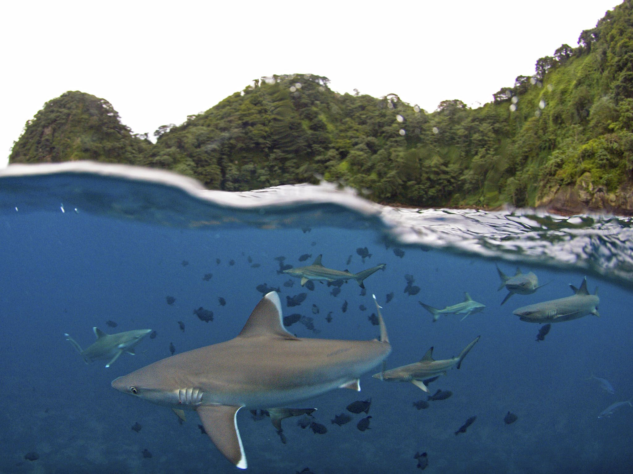 UNESCO World Heritage, Cocos Island, Costa Rica: Below the waterline, sharks fill the ocean... [Photo of the day - July 2017]