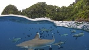 UNESCO World Heritage, Cocos Island,... [Photo of the day - 25 JULY 2017]