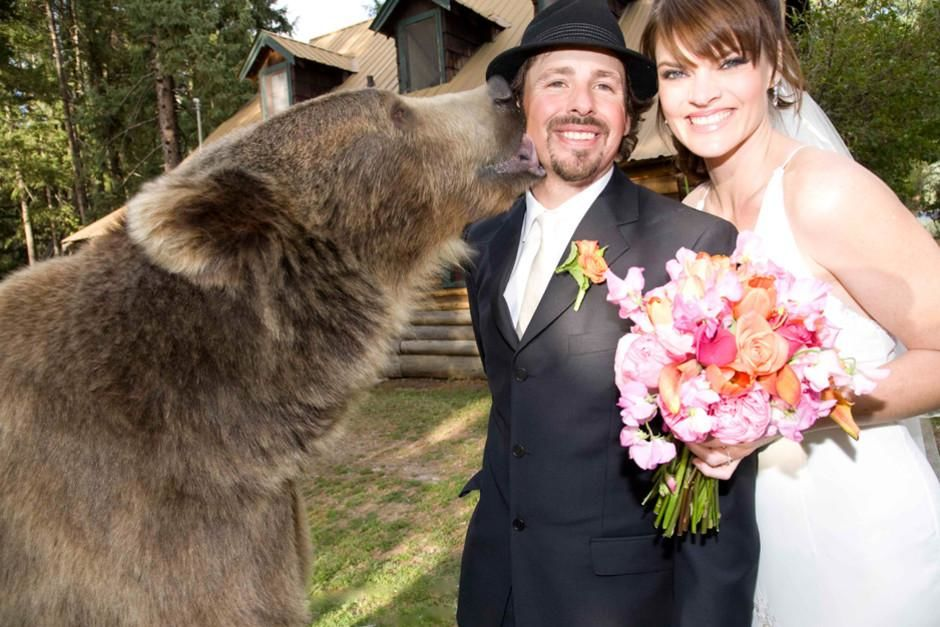 Brutus, un grizzly de 360kg, est le témoin de Casey à son mariage. Casey Anderson est un natura... [Photo of the day - mars 2012]