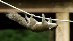 A squirrel on an obstacle course. ... [Photo of the day - 21 OCTOBER 2017]
