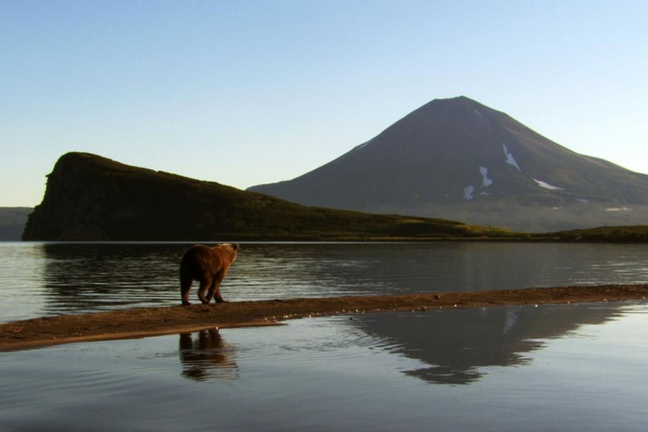 Bears and volcanoes of Kamchatka. This image is from Wild Russia. [Dagens foto - mars 2012]