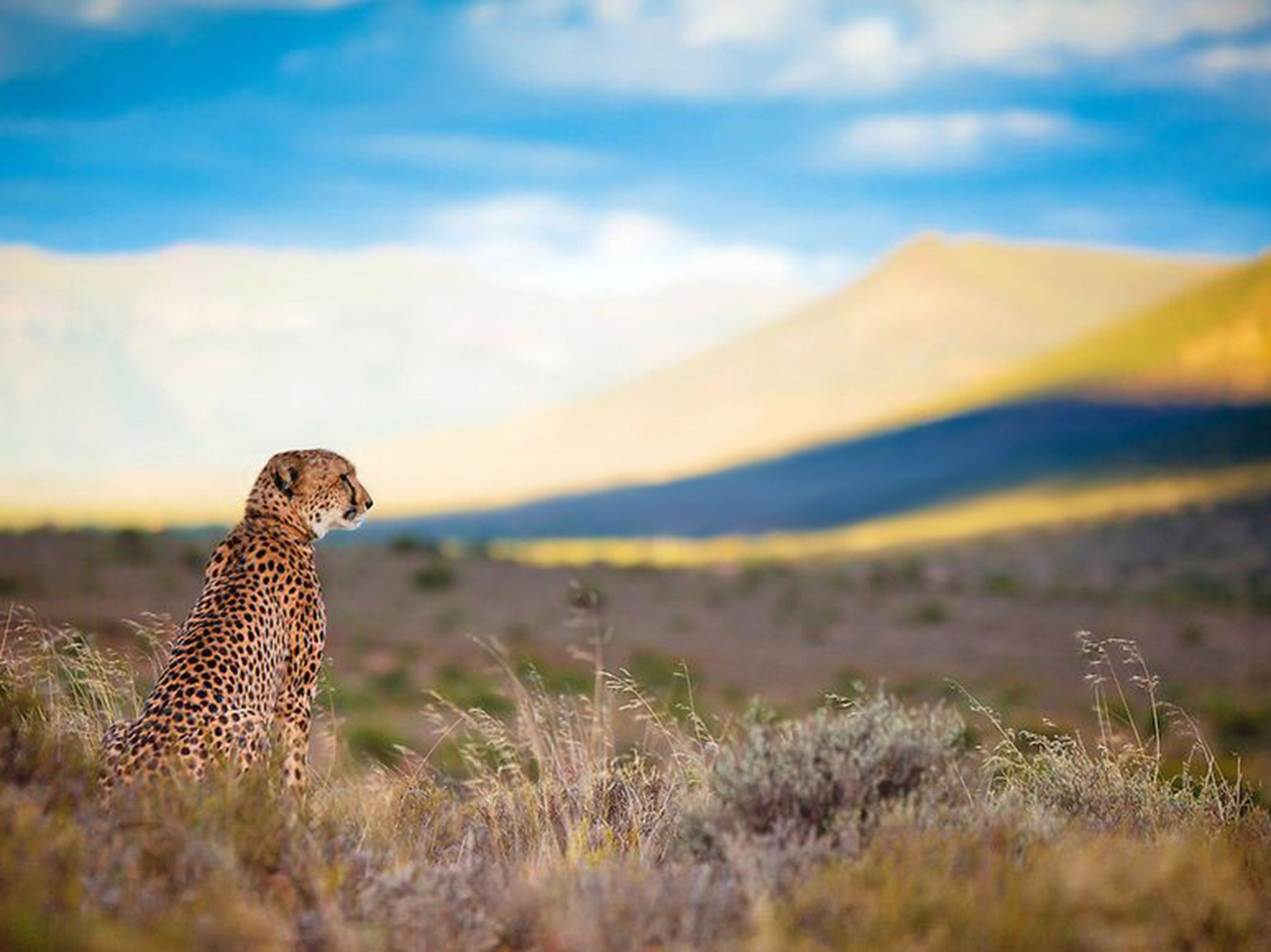 Great Karoo, South Africa:  Sibella looking over plains.  This image is from Sibella: The... [Photo of the day - November 2017]