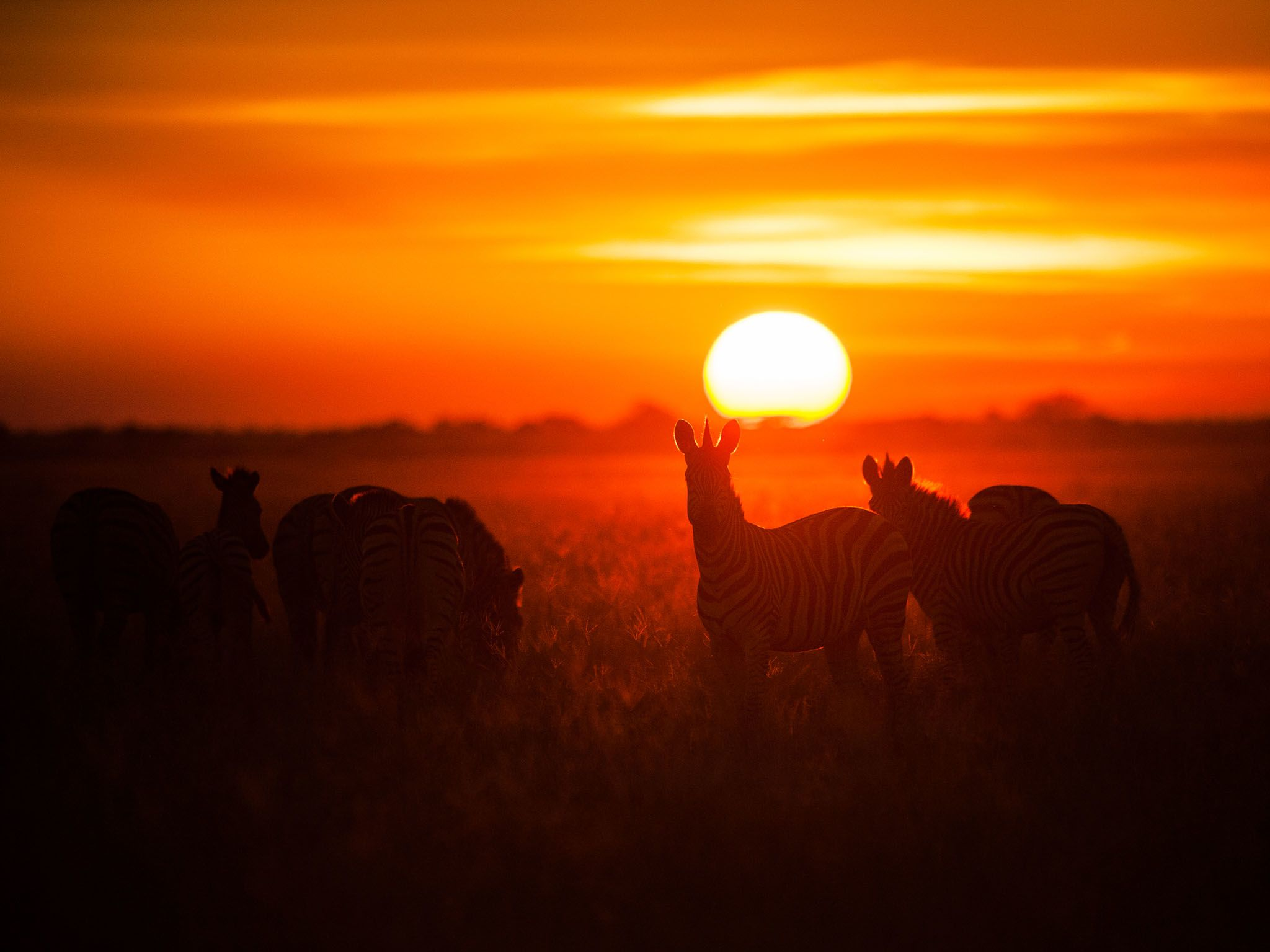 Chobe National Park, Botswana:  This small herd of zebra are perfectly silhouetted by the... [Photo of the day - November 2017]