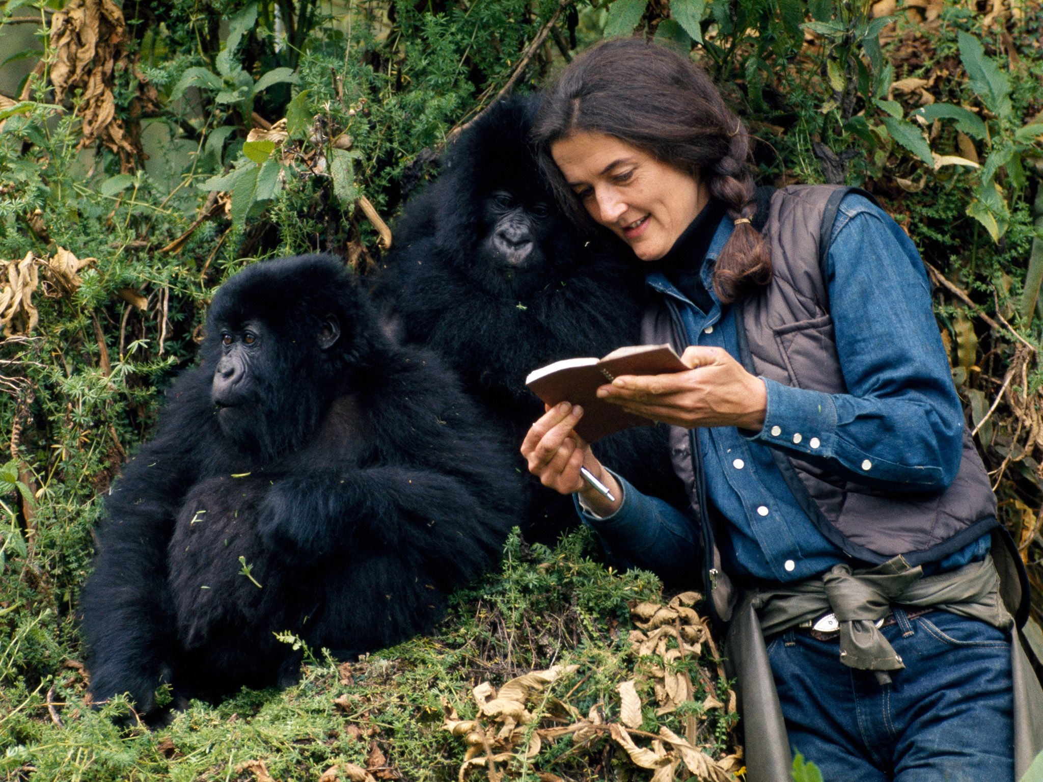 Dian Fossey in the wild with Mountain Gorillas. This image is from Dian Fossey: Secrets in the Mist. [Photo of the day - December 2017]