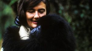 Dian Fossey holds a mountain gorilla... [Photo of the day - 15 十二月 2017]
