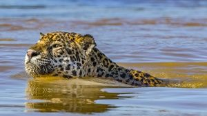 Pantanal, Brazil:  Close up of... [Photo of the day - 22 JANUARY 2018]