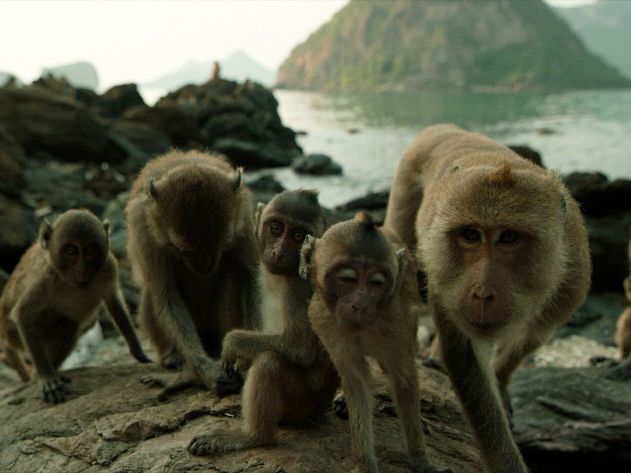 A family of macaques sit on the rocks of Koram Island, Thailand. These macaques are one of very... [Photo of the day - 三月 2018]