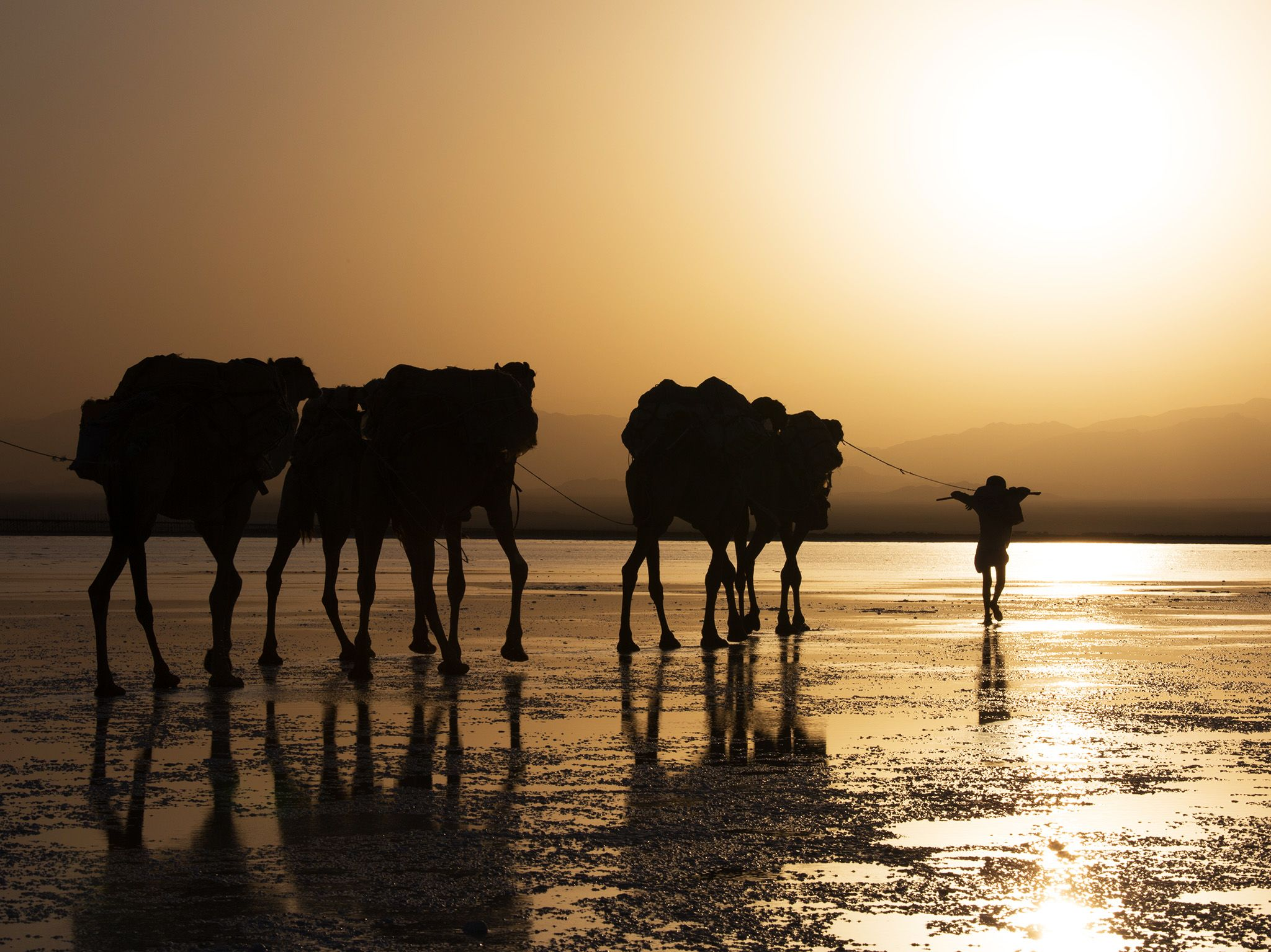 Danakil, Ethiopia:  The Salt Traders begin their walk across the Danakil Depression with their... [Photo of the day - آوریل 2018]
