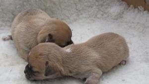 VIDA NO VENTRE: Cães e Lobos fotografia