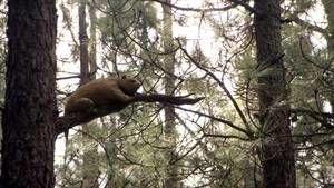 EVOLUÇÃO DAS ESPÉCIES: Ursos fotografia