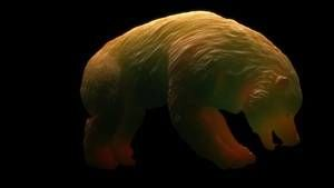 Evolutions: Bear Necessities photo