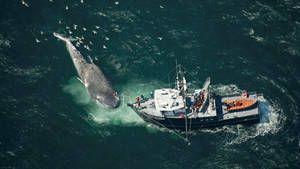 Im Reich des Blauwals Foto