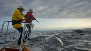Blue Whale Odyssey photo