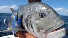 דיג המפלצות תוכנית
