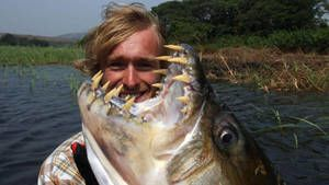Hrůzyplná ryba fotografie