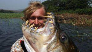 Divje ribe Fotografija
