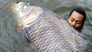 Ferocious Fish Foto