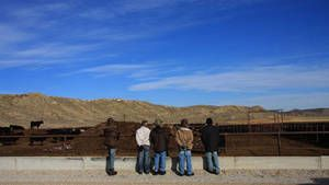 Cowboy folket foto